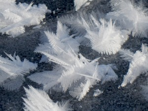 Ice Crystals-EM Photography
